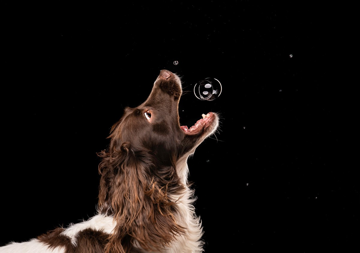 mutley-snaps-photography-dog-photography