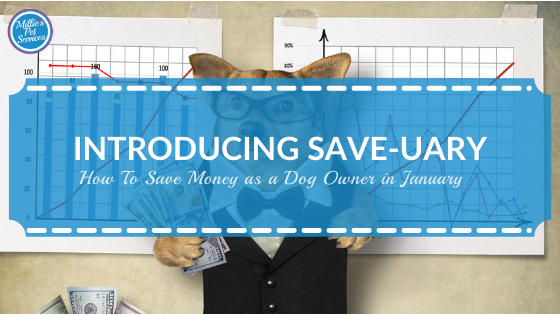 how-save-money-dog-owner-january-save-uary