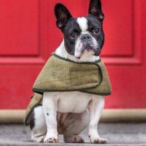 country-twee-handmade-dog-coat-sheepskin-lined-french-bulldog-medium