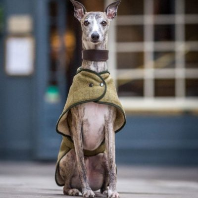 country-twee-handmade-dog-coat-sheepskin-lined-sight-hound-whippet-greyhound-lurcher3