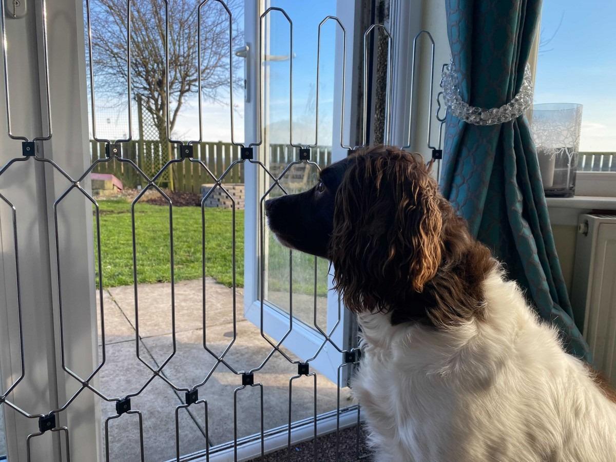 dog-g8-prevent-minimise-dog-theft